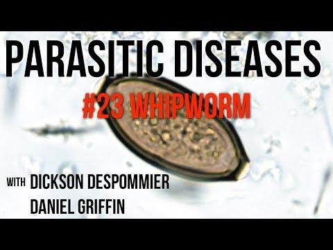 organizmus paraziták milyen paraziták elleni gyógyszerek