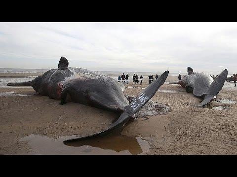 bálna és parazitái