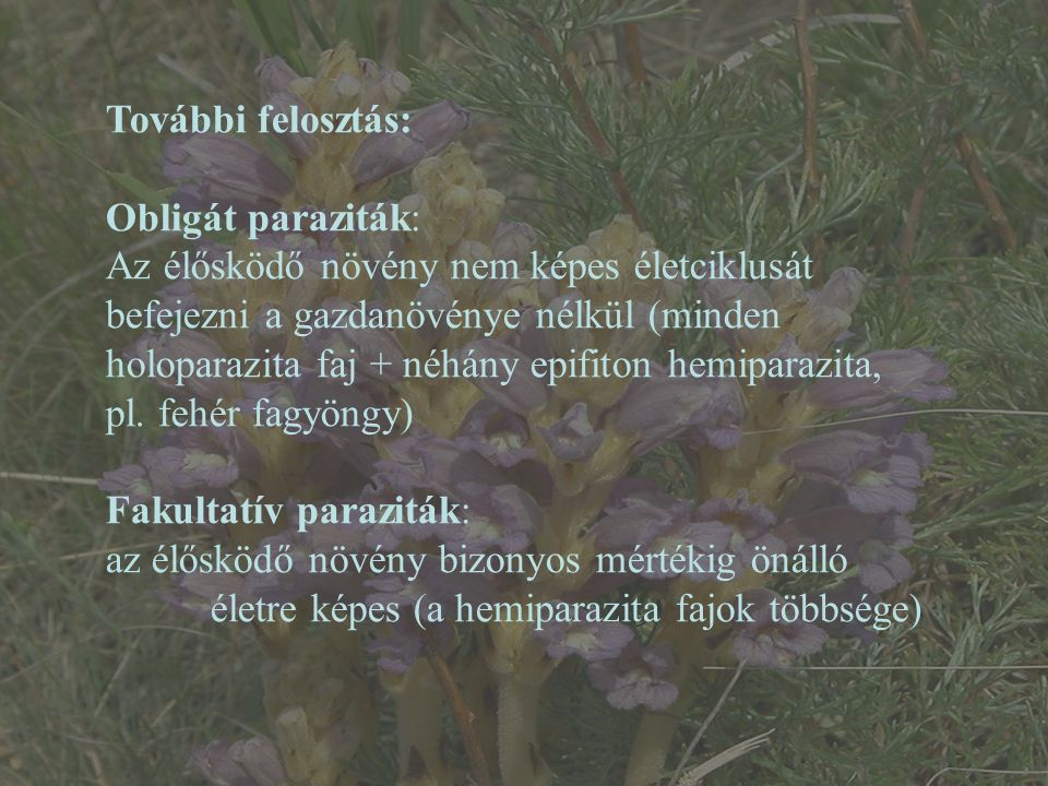 Alebion carchariae – Wikipédia