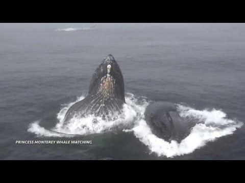 Paraziták kényszerítették öngyilkosságra a bálnákat? - kellystudio.hu