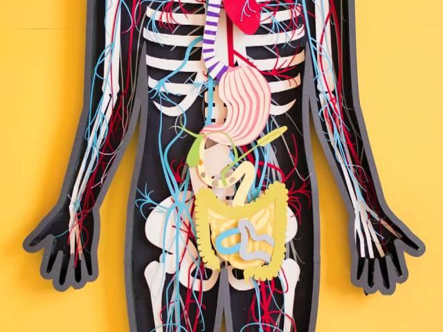 videó az emberi test parazitáiról Ascaris emberi, hogy néz ki