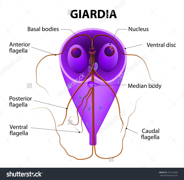 spirochete parazita vagy sem