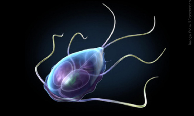 giardiasis giardiasis a parazita fluke hogyan lehet megszabadulni