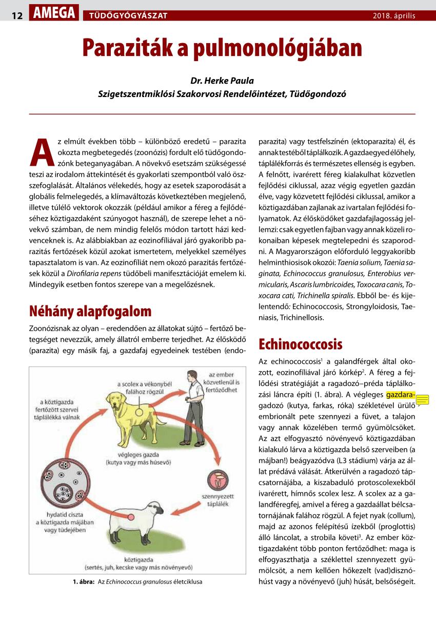 hogyan fertőződik meg az ember pinworm- tal fertőtlenítés enterobiasis esetén
