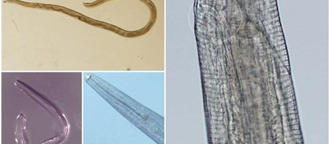 lakó gonosz parazita paraziták kapcsolattípusai