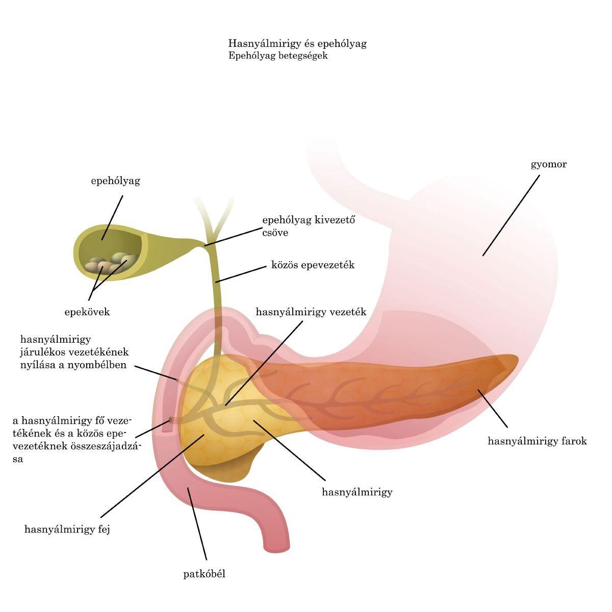 helminták az epehólyag kezelésében