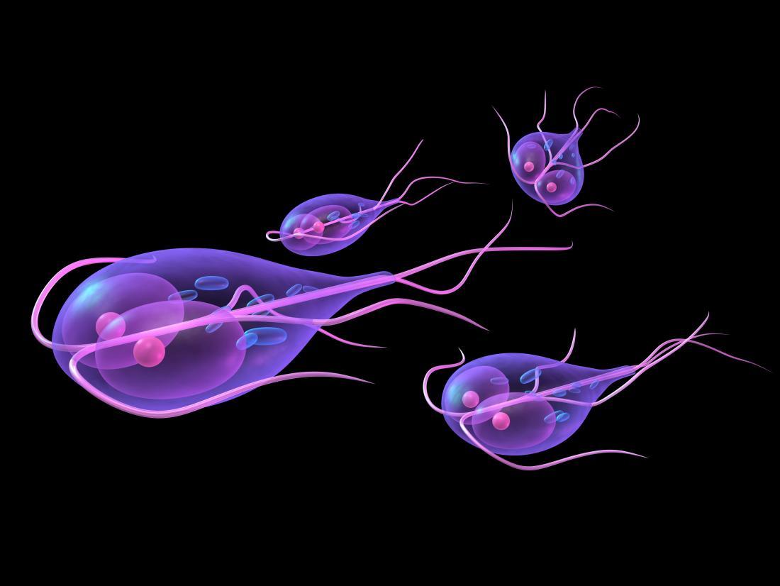 giardiasis giardiasis szükséges- e kezelni az orsóférget