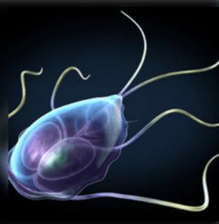 parazitákkal járó tünetek a bélkezelésben