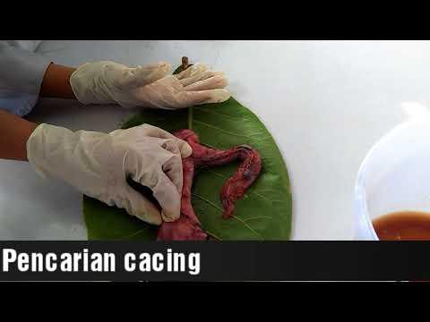 Mit igyon a pinwormok ellen, Megbízható gyógyszer a helminták ellen