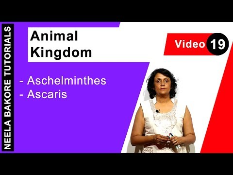 Ascariasis és pinwormák kezelése