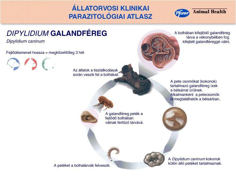 parazitaellenes készítmények a bőr számára