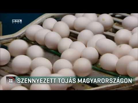 kerekféreg- tojás az