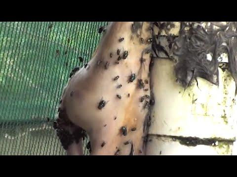 pinwormok a test jeleiben