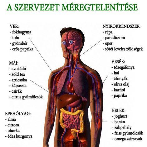 paraziták a tüdőben és a hörgőkben
