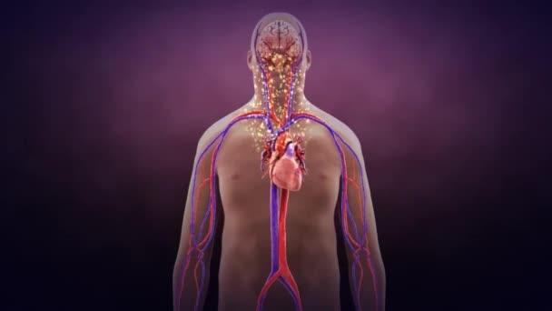 Jumping gének mobilizálódnak a Rett-szindróma emberének agyában