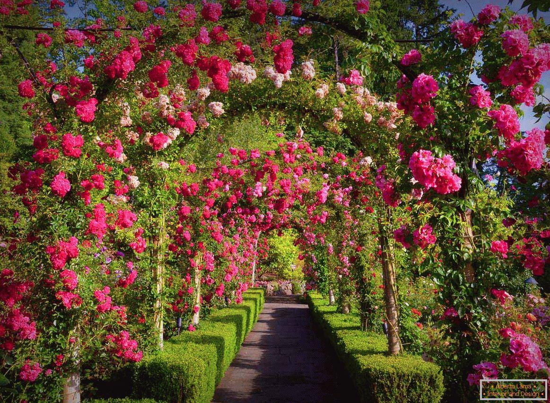 rózsák galandféreghez
