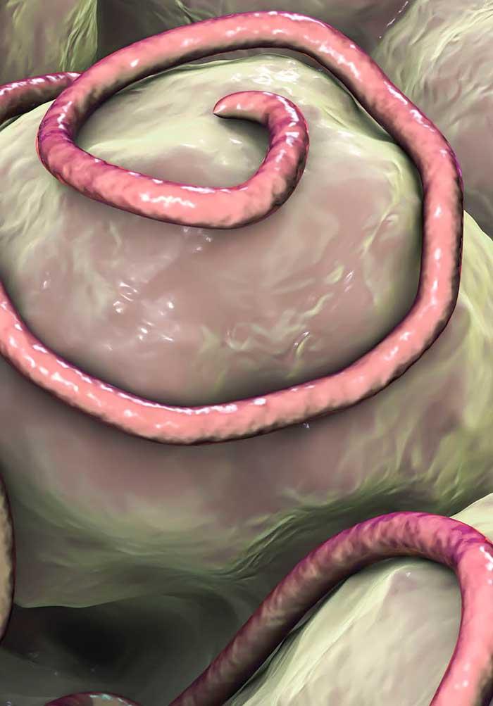 A helminthiasis megelőzése. A helminthiasis diagnosztikája, kezelése és megelőzése