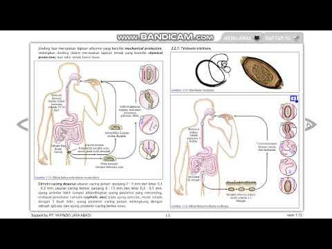 Az emberi test egy genetikai csatatér