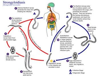 vélemények a paraziták testének tisztítására kezelt ascaris