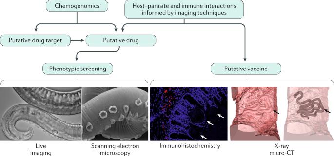 milyen gyógymód hatékony a paraziták ellen
