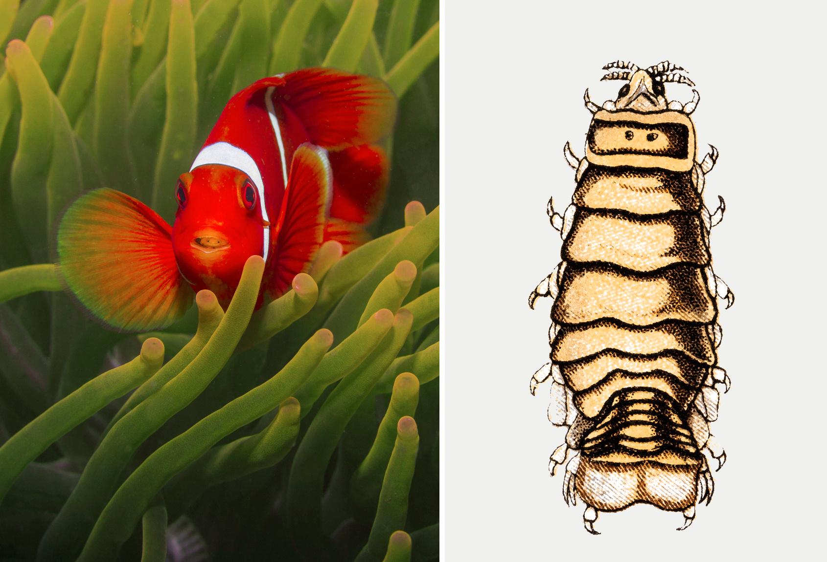 a paraziták olyanok, mint az állatok