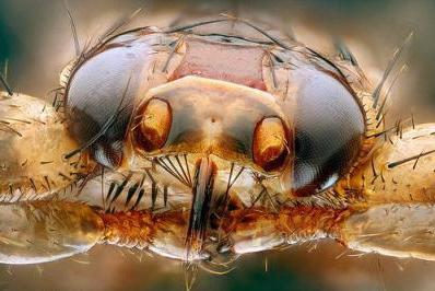 Bosszantó parazita
