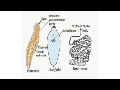 Pinworm diagnózis egy gyermekben, A leghatékonyabb megoldás a pinworms eltávolítására