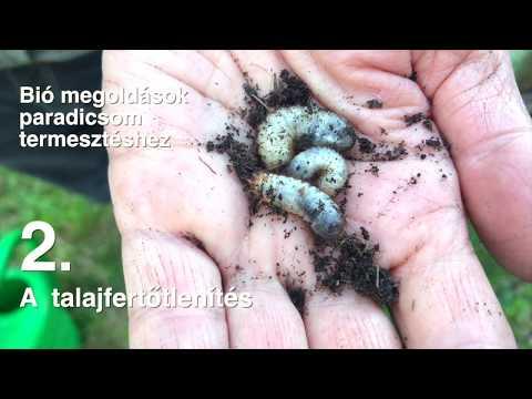 paraziták a szennyvízben emberi paraziták hová menjenek