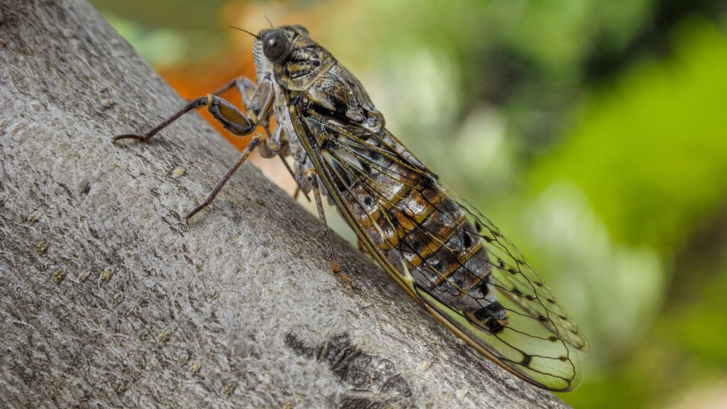parazita igazgató paraziták emberben ascaris