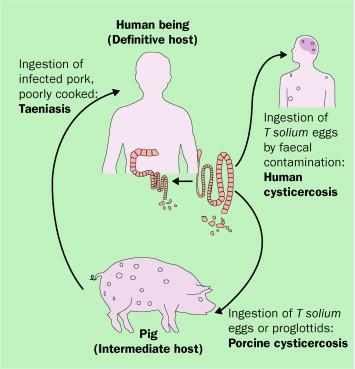 a bőrön paraziták tüneteivel