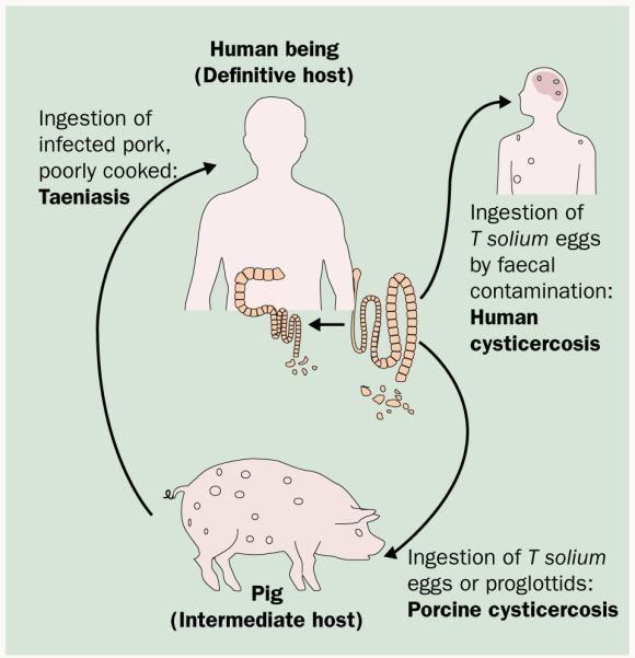 paraziták a test tünetein