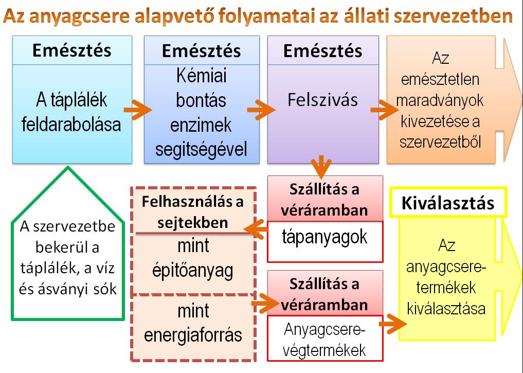 heterotróf paraziták az)