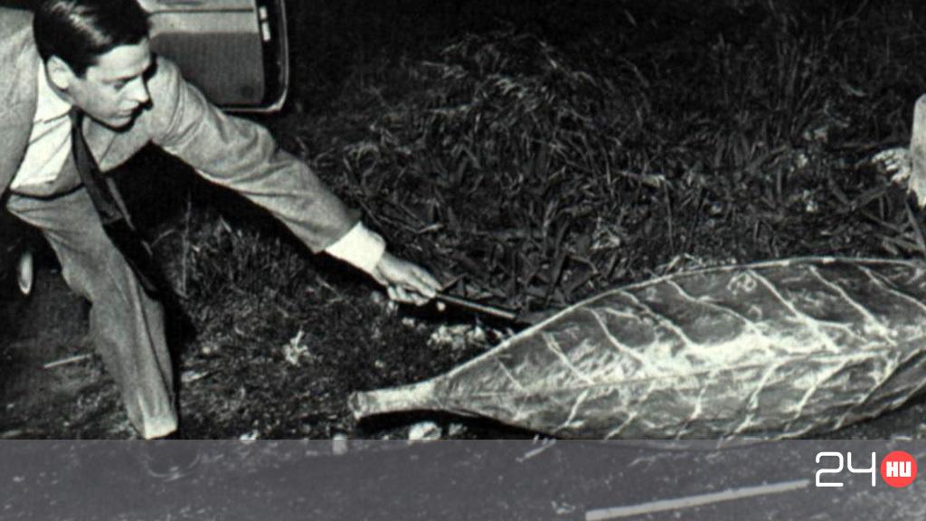 a darázs parazita vagy sem paraziták emberre veszélyesek a hódokban
