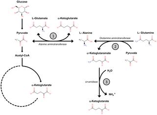 paraziták protozoon rohadt lehelet, böfögés
