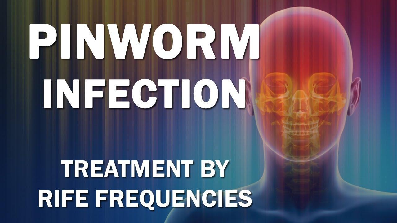 mekkora a pinworm pinworms urethritis