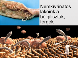 szilárd fém fogaskerék 5 hülye parazita