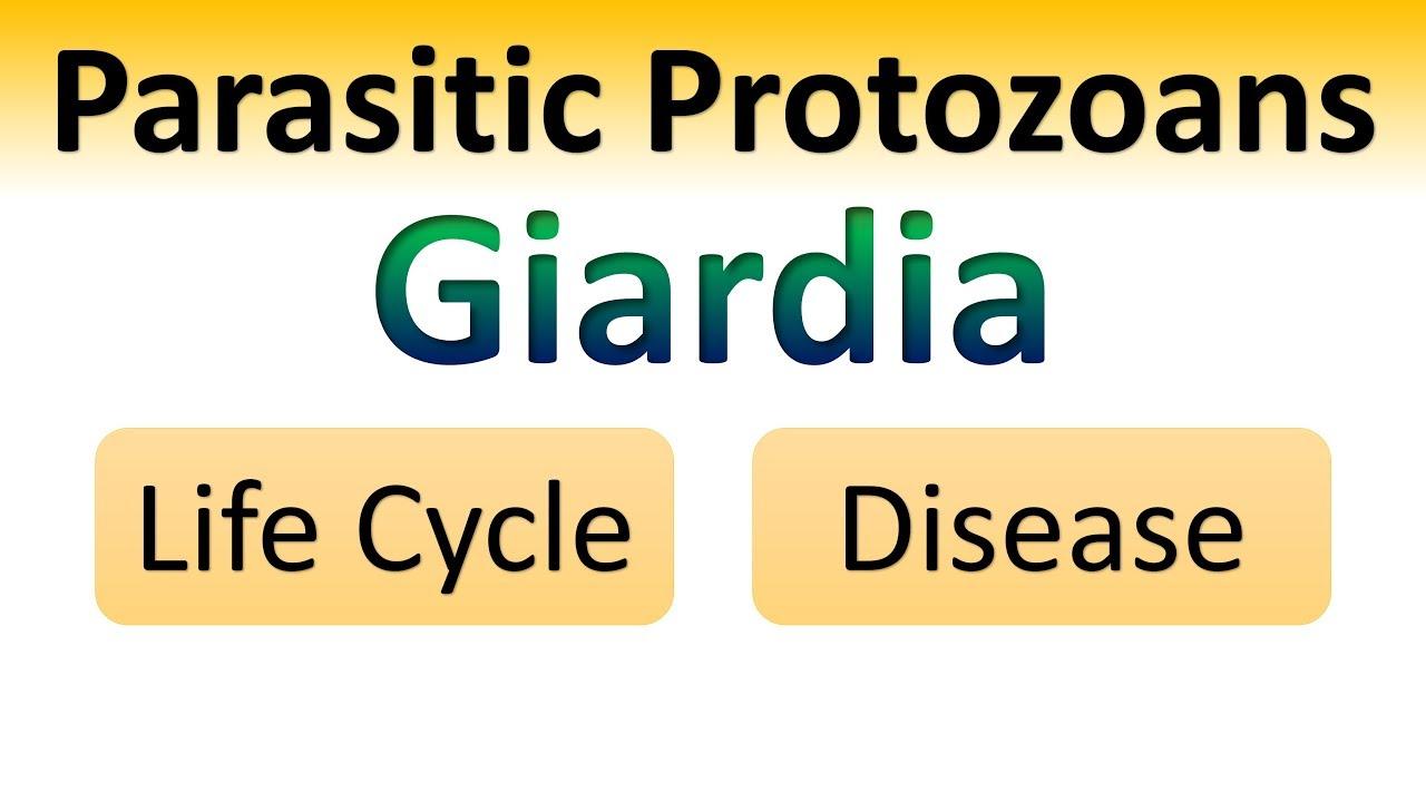 a giardia a rendszer parazitája