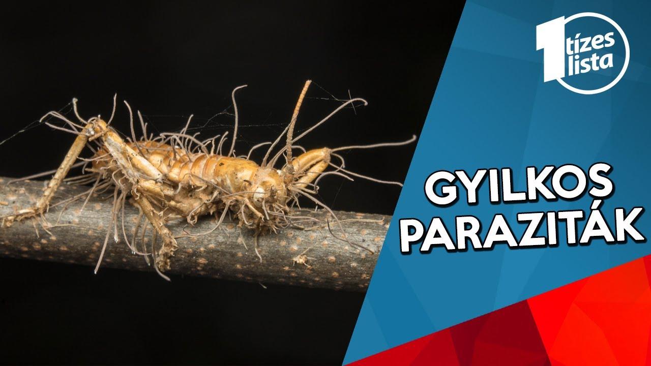 gyógyítja a parazita férgeket
