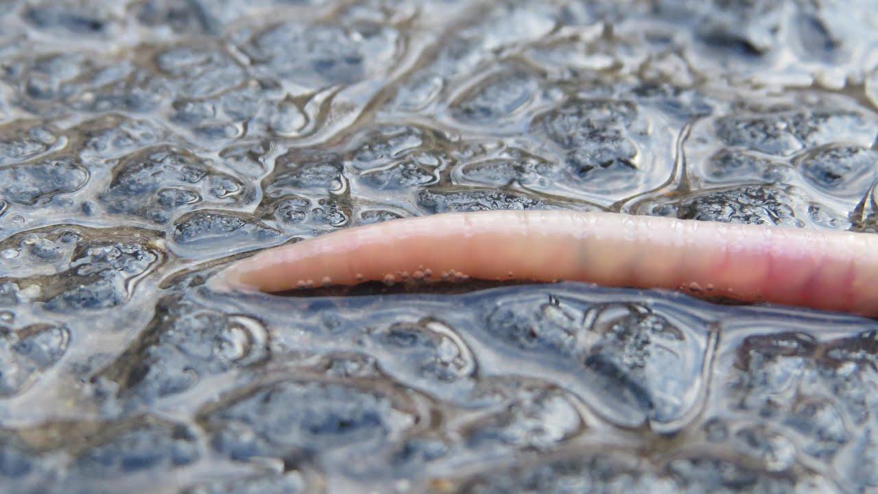 parazitaellenes szer minden típushoz dendrobium paraziták