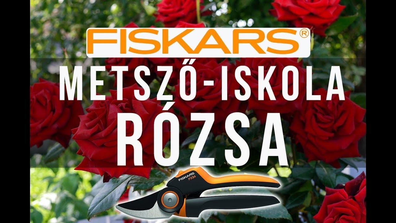 Hogyan kell kezelni a rózsa a paraziták
