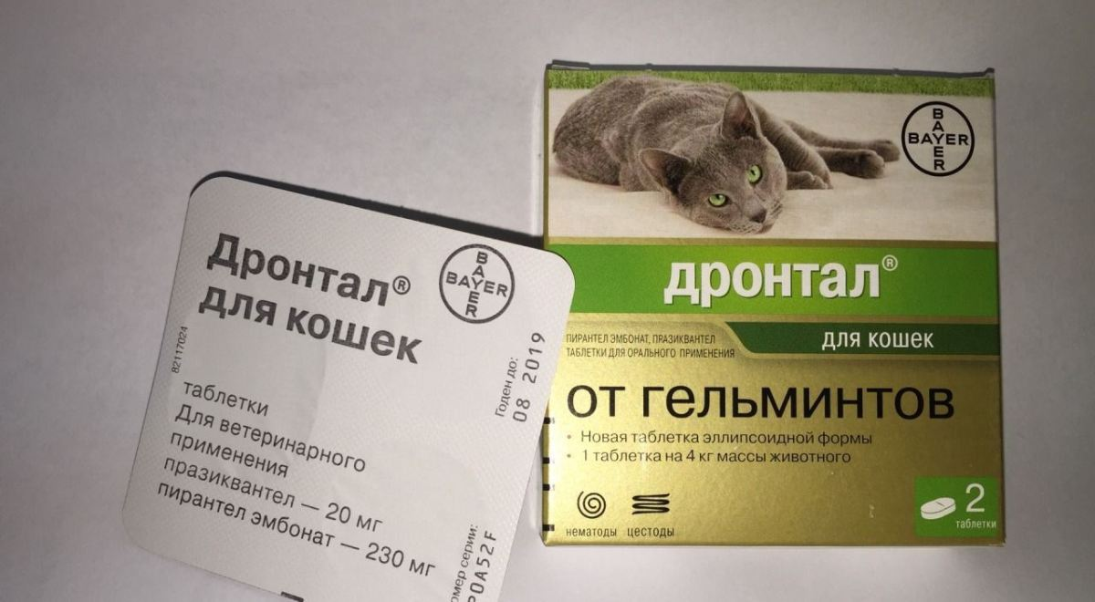 gyógymód a paraziták széles körére olcsó orvosság pinwormok ellen