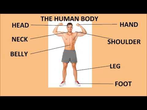 Az emberi test parazitájának diagnosztizálása és kezelése