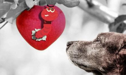 Kutya és macska hasmenés okai, tünetei és kezelése