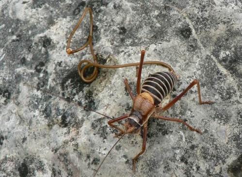 hihetetlen paraziták ingatlanos paraziták
